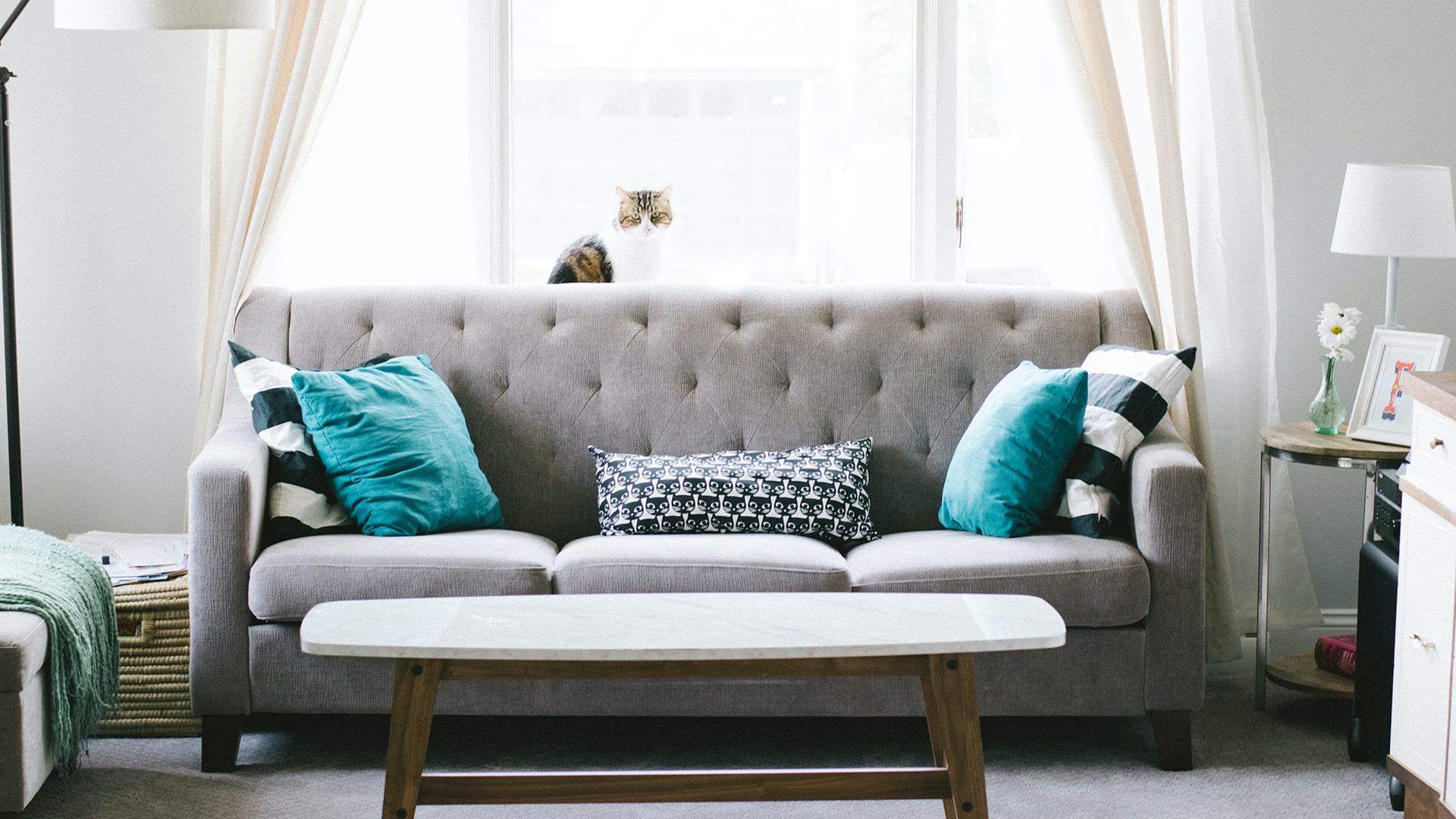 Szara sofa w salonie z niebieskimi poduszkami